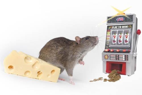 Бесплатные Онлайн Игровые Автоматы Гаминаторы