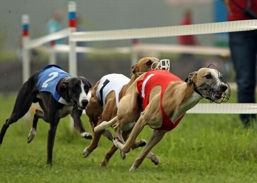 собачьих по на играть ставкам бегах